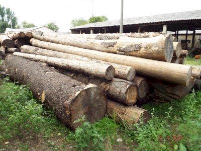 ADJUDECAT -Material Lemnos: Lot 3 - 53,73 m3 lemn rotund esență rășinoasă, specia molid (a III-a licitatie)